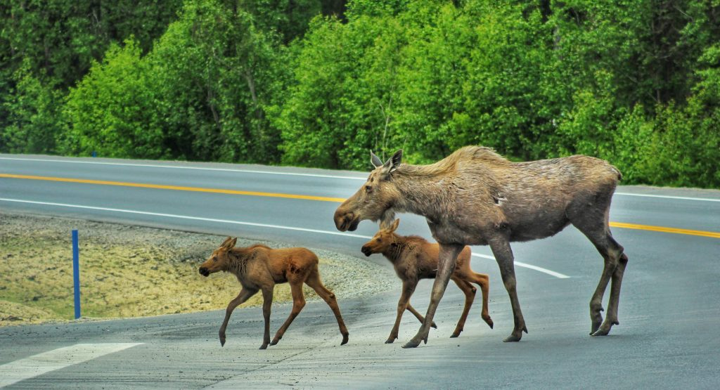 Where To See Wildlife In Anchorage